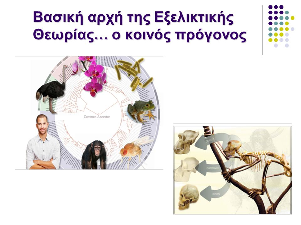 Βασική αρχή της Εξελικτικής Θεωρίας… ο κοινός πρόγονος