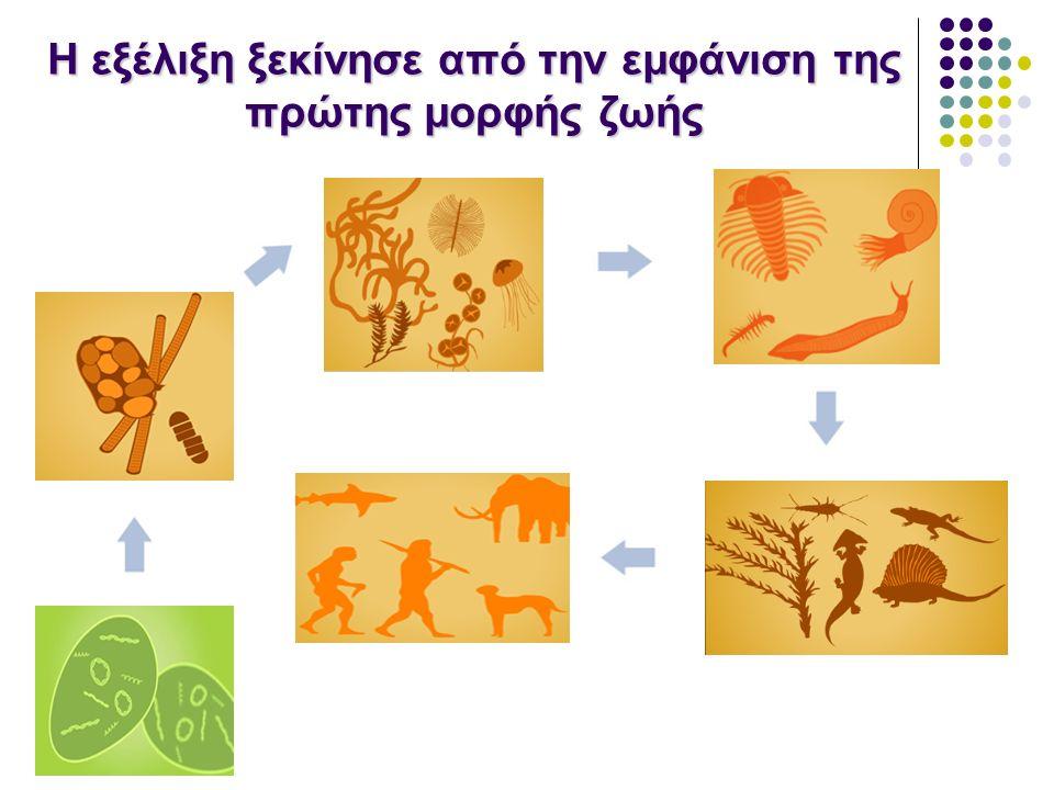 Μεταλλάξεις & Χαρακτηριστικά Οι αλλαγές στο DNA προσδίδουν ποικιλία μορφολογικών και βιοχημικών χαρακτηριστικών στους οργανισμούς.