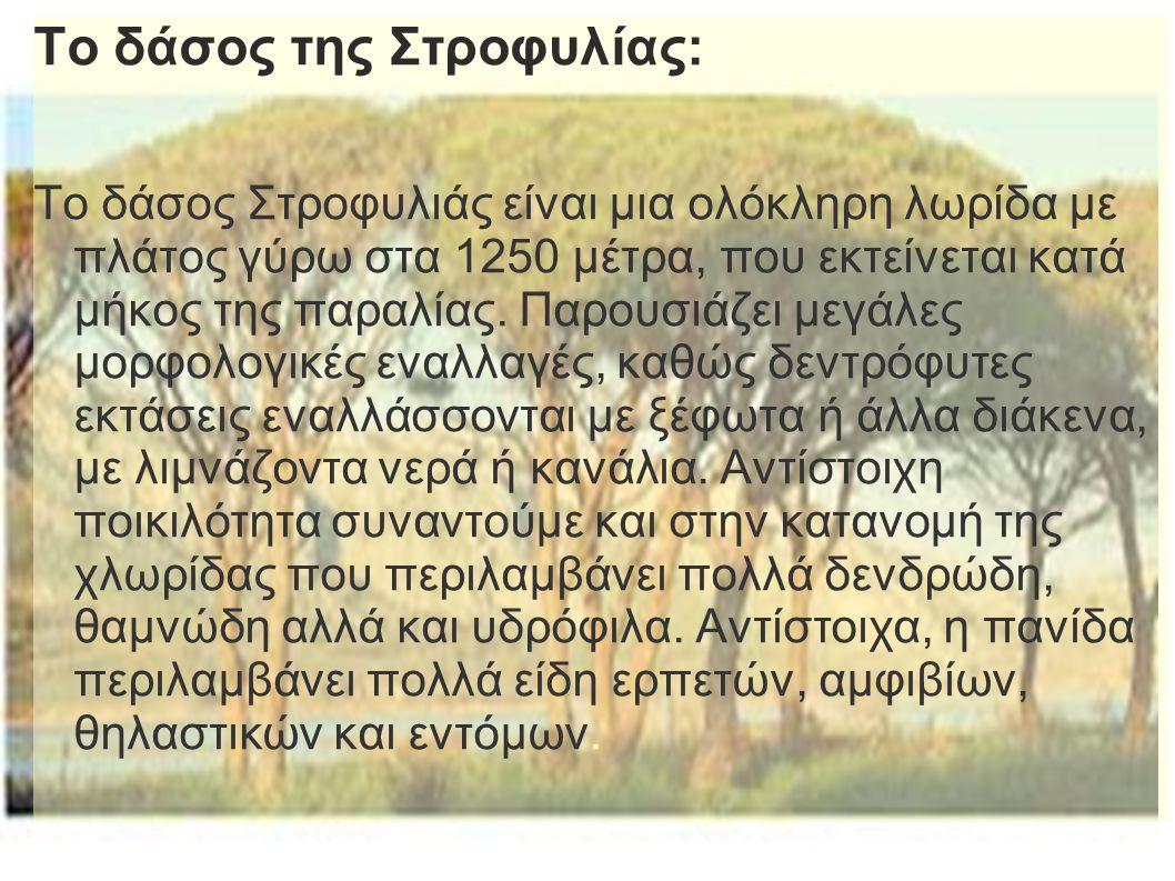 Το δάσος της Στροφυλίας: Το δάσος Στροφυλιάς είναι μια ολόκληρη λωρίδα με πλάτος γύρω στα 1250 μέτρα, που εκτείνεται κατά μήκος της παραλίας. Παρουσιά