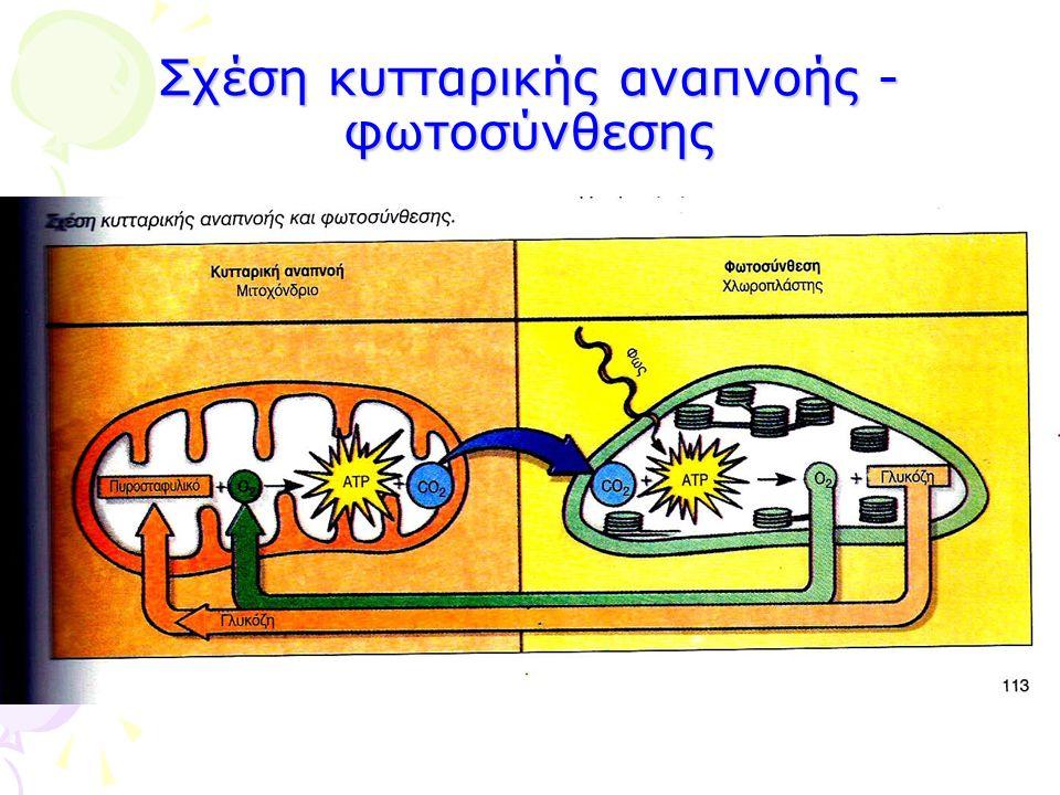 Σχέση κυτταρικής αναπνοής - φωτοσύνθεσης