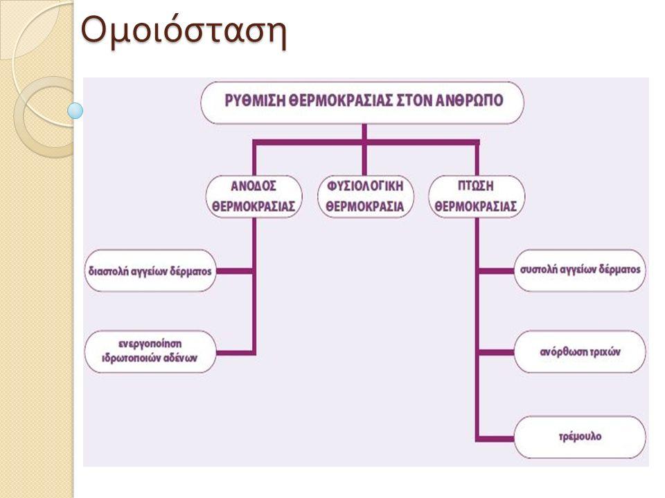 Παράγοντες που διαταράσσουν την Ομοιόσταση  διάφοροι περιβαλλοντικοί παράγοντες ( π.