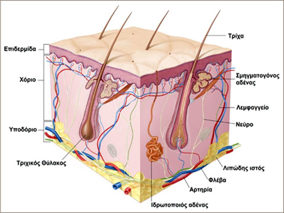  Τη σωματική και συναισθηματική μας σταθερότητα,  Παραγωγή θερμότητας (αποτέλεσμα της υπέρυθρης ακτινοβολίας)  Σύνθεση βιταμίνης D στο δέρμα (αποτέλεσμα της UVB ακτινοβολίας – αρκεί ένα 10λεπτο την ημέρα)  Φωτοσύνθεση των φυτών