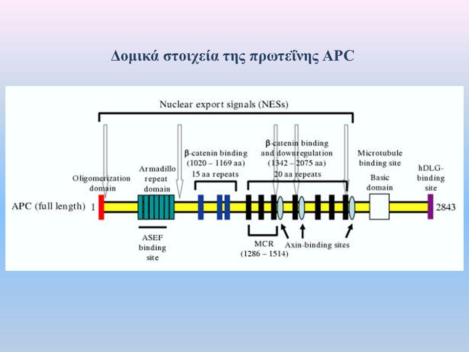 Δομικά στοιχεία της πρωτεΐνης ΑPC