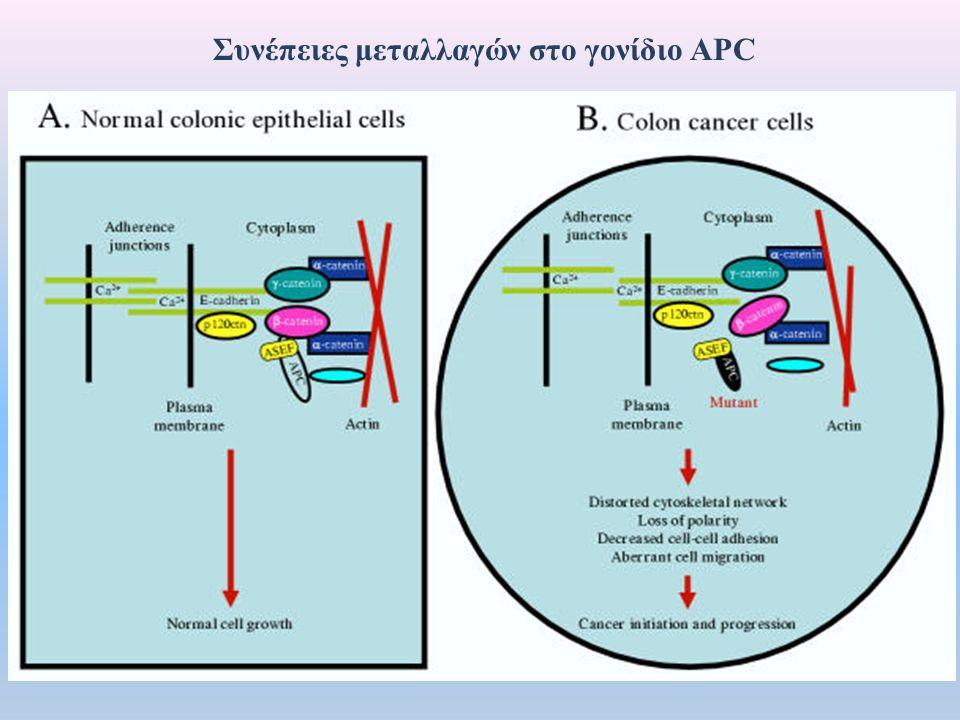 Συνέπειες μεταλλαγών στο γονίδιο APC