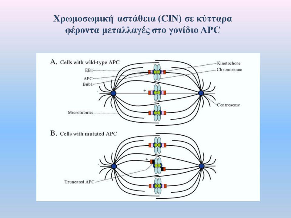 Xρωμοσωμική αστάθεια (CIN) σε κύτταρα φέροντα μεταλλαγές στο γονίδιο APC