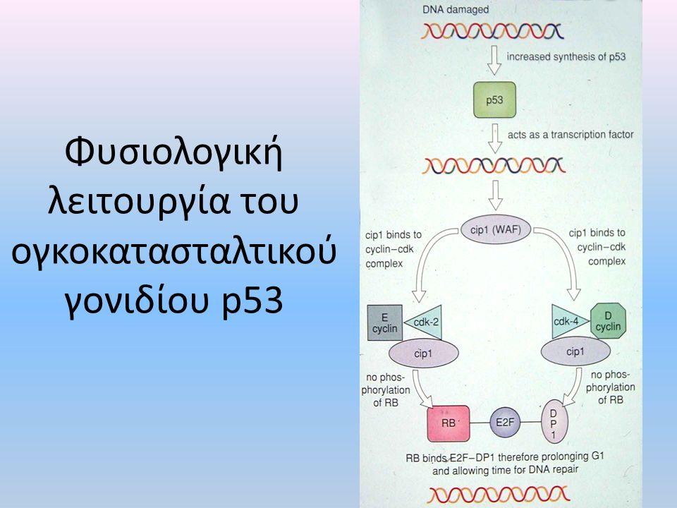 Φυσιολογική λειτουργία του ογκοκατασταλτικού γονιδίου p53