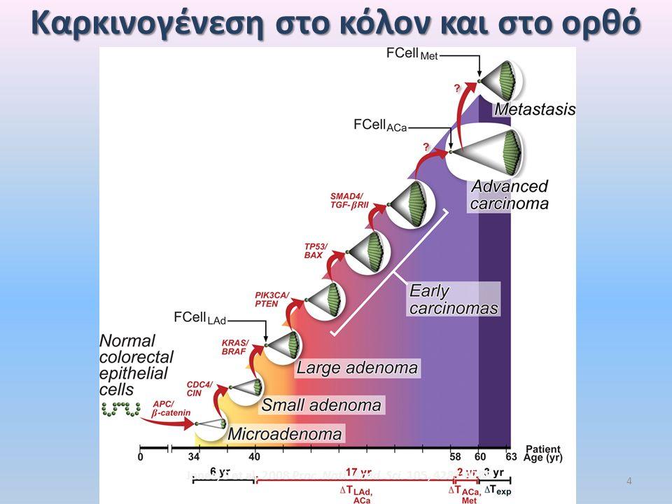 Mείζονος σημασίας Mείζονος σημασίας μοριακές ανωμαλίες Ογκογονίδια : RAS, RAF Oγκοκατασταλτικά γονίδια: APC,p53,γονίδια χρωμοσώματος 18q ( DCC,SMAD4 & SMAD2),σηματοδότηση μέσω του TGF-β.