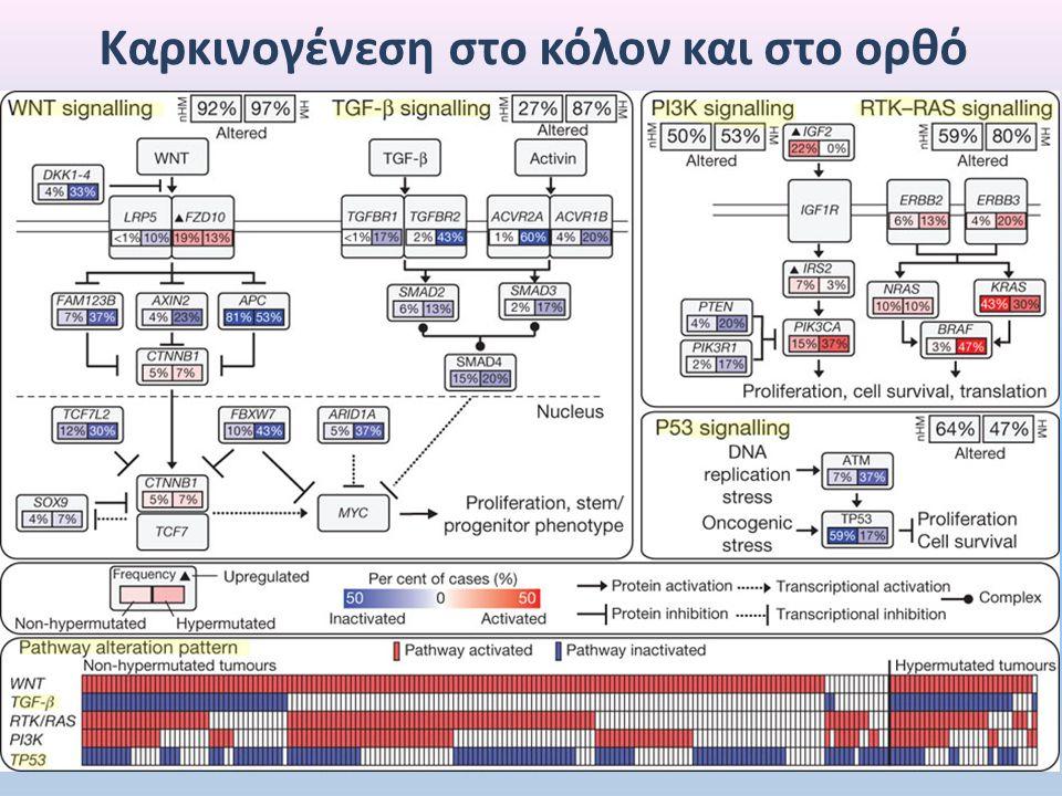 M 1 2 3 4 5 6 7 8 9 10 11 12 13 132bp 56bp 76bp Αποτελέσματα ανάλυσης του κωδικονίου 248 του p53 μετά από πέψη με MspI
