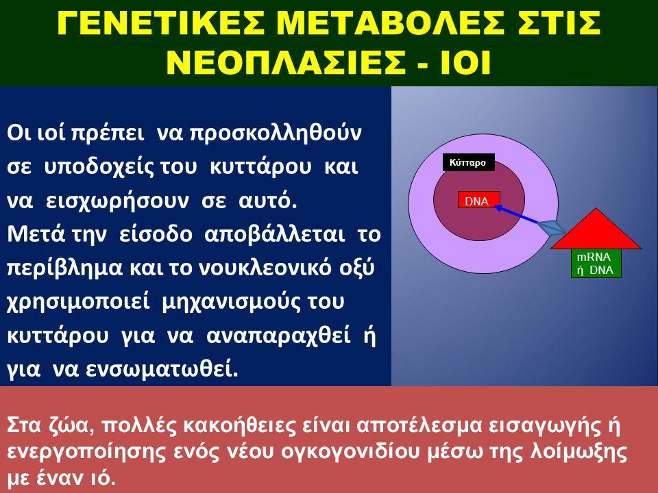 ΓΕΝΕΤΙΚΕΣ ΜΕΤΑΒΟΛΕΣ ΣΤΙΣ ΝΕΟΠΛΑΣΙΕΣ - ΙΟΙ Οι ιοί πρέπει να προσκολληθούν σε υποδοχείς του κυττάρου και να εισχωρήσουν σε αυτό.
