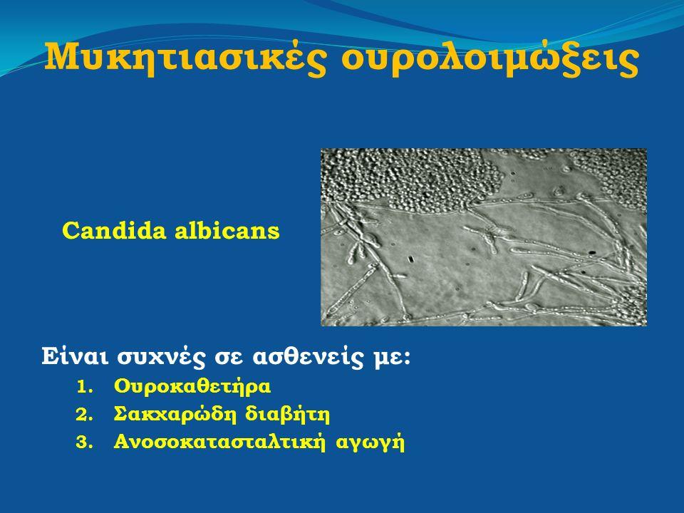 Μυκητιασικές ουρολοιμώξεις Candida albicans Είναι συχνές σε ασθενείς με: 1. Ουροκαθετήρα 2. Σακχαρώδη διαβήτη 3. Ανοσοκατασταλτική αγωγή