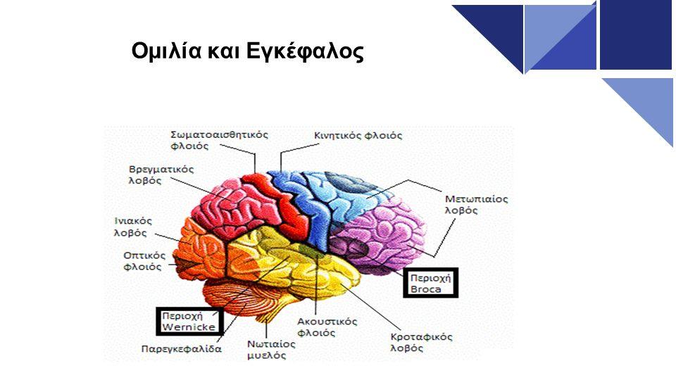 Περιοχή Broca Εντοπίζεται στον μετωπιαίο λοβό Σε αυτήν την περιοχή βρίσκεται το κινητικό κέντρο του λόγου, ελέγχει και ρυθμίζει τις κινήσεις του στόματος κατα την ομιλία (γλώσσα, υπερώα, φωνητικές χορδές) παίζει επίσης σημαντικό ρόλο στην γλωσσική κατανόηση  Ασθενείς με βλάβη σε αυτήν την περιοχή παρουσιάζουν αδυναμία παραγωγής λογου.