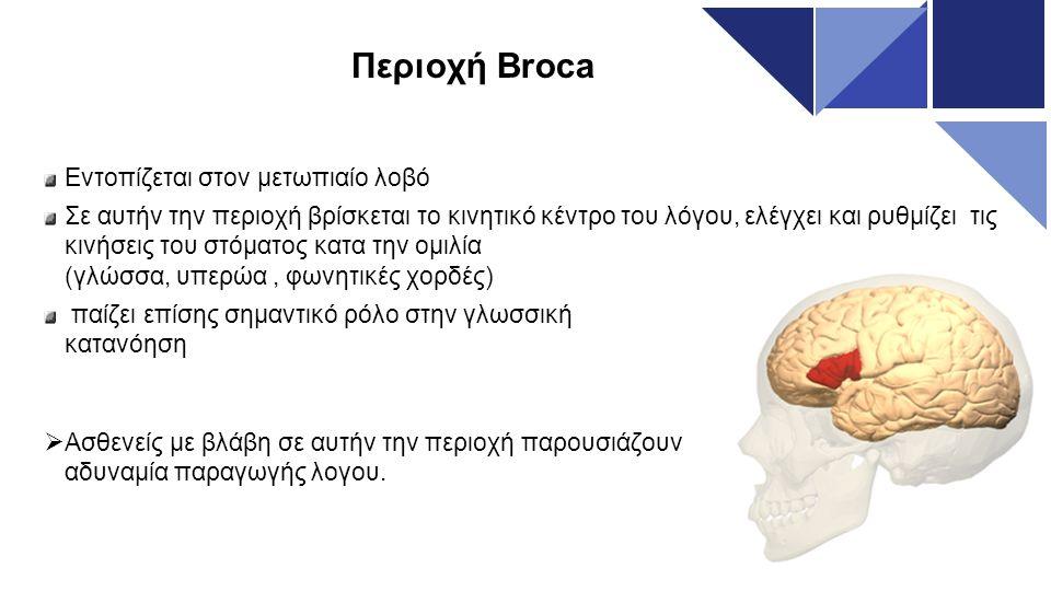 Περιοχή Broca Εντοπίζεται στον μετωπιαίο λοβό Σε αυτήν την περιοχή βρίσκεται το κινητικό κέντρο του λόγου, ελέγχει και ρυθμίζει τις κινήσεις του στόμα