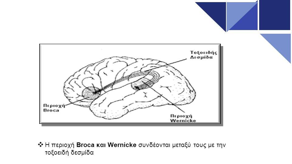 Διαταραχές Ομιλίας Στην Άρθρωση :  Δυσλαλία: Μη στη σωστή παραγωγή των ήχων - δυσνόητη ομιλία.