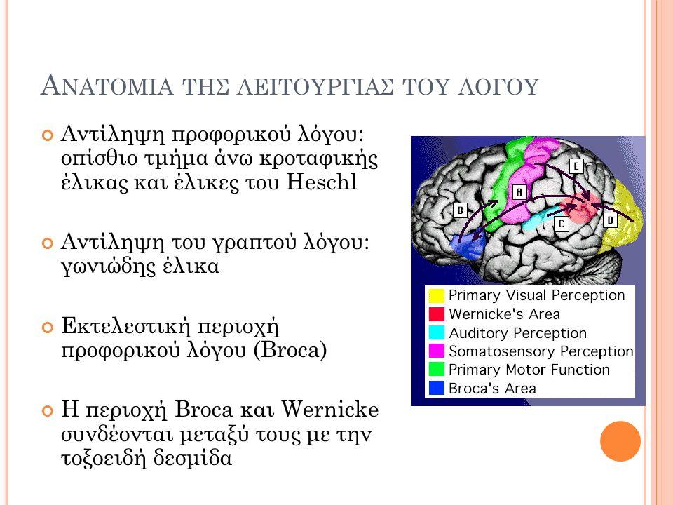 Α ΝΑΤΟΜΙΑ ΤΗΣ ΛΕΙΤΟΥΡΓΙΑΣ ΤΟΥ ΛΟΓΟΥ Αντίληψη προφορικού λόγου: οπίσθιο τμήμα άνω κροταφικής έλικας και έλικες του Heschl Αντίληψη του γραπτού λόγου: γωνιώδης έλικα Εκτελεστική περιοχή προφορικού λόγου (Broca) Η περιοχή Broca και Wernicke συνδέονται μεταξύ τους με την τοξοειδή δεσμίδα