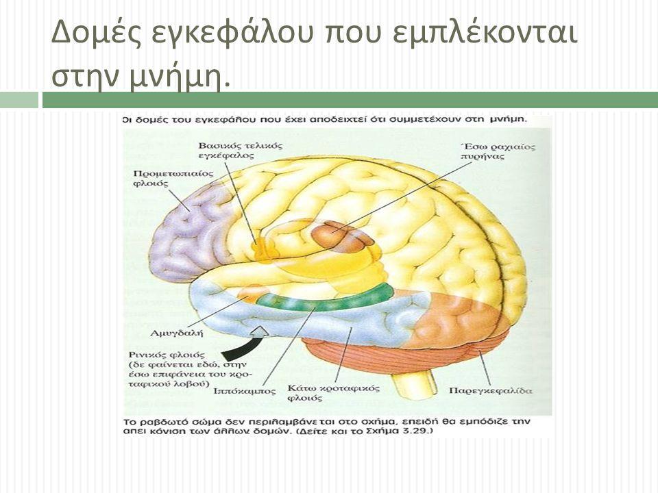 Δομές εγκεφάλου που εμπλέκονται στην μνήμη.