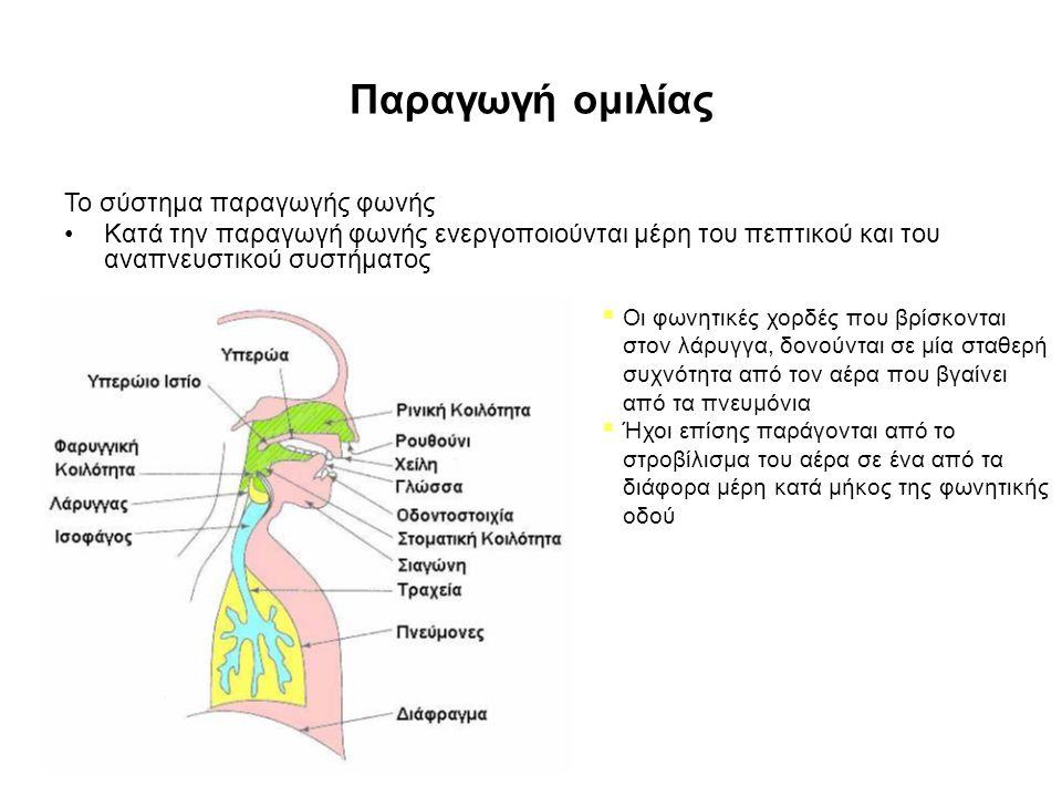 Παραγωγή ομιλίας Το σύστημα παραγωγής φωνής Κατά την παραγωγή φωνής ενεργοποιούνται μέρη του πεπτικού και του αναπνευστικού συστήματος  Οι φωνητικές χορδές που βρίσκονται στον λάρυγγα, δονούνται σε μία σταθερή συχνότητα από τον αέρα που βγαίνει από τα πνευμόνια  Ήχοι επίσης παράγονται από το στροβίλισμα του αέρα σε ένα από τα διάφορα μέρη κατά μήκος της φωνητικής οδού