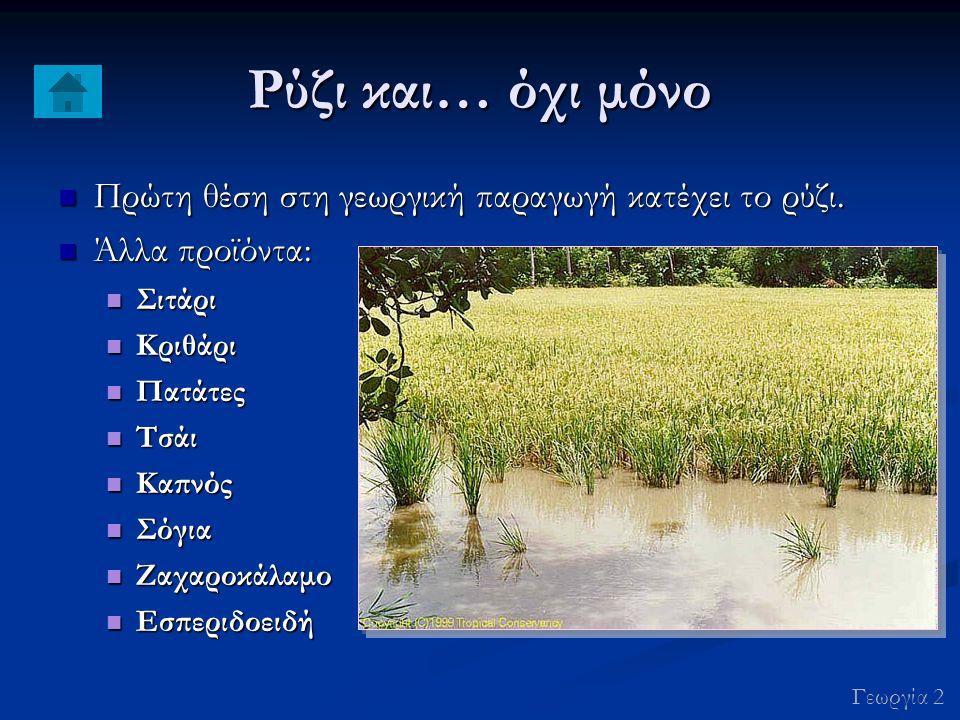 Ρύζι και… όχι μόνο Πρώτη θέση στη γεωργική παραγωγή κατέχει το ρύζι.