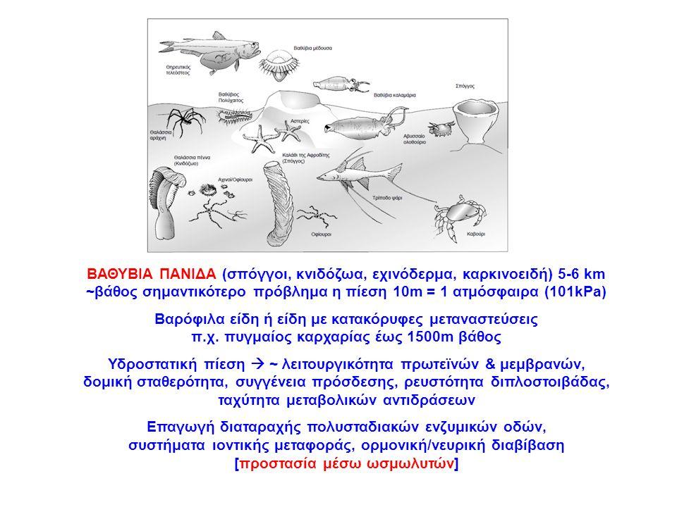 ΒΑΘΥΒΙΑ ΠΑΝΙΔΑ (σπόγγοι, κνιδόζωα, εχινόδερμα, καρκινοειδή) 5-6 km ~βάθος σημαντικότερο πρόβλημα η πίεση 10m = 1 ατμόσφαιρα (101kPa) Βαρόφιλα είδη ή ε