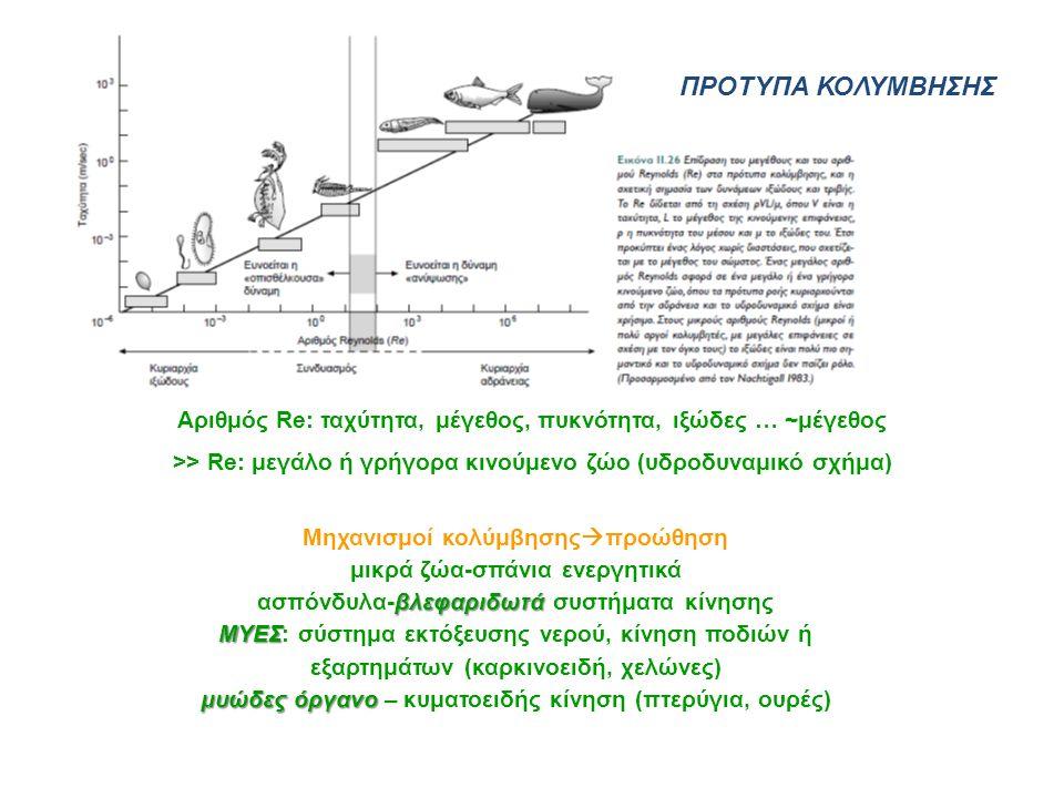 βλεφαριδωτά ΜΥΕΣ μυώδες όργανο Μηχανισμοί κολύμβησης  προώθηση μικρά ζώα-σπάνια ενεργητικά ασπόνδυλα-βλεφαριδωτά συστήματα κίνησης ΜΥΕΣ: σύστημα εκτό