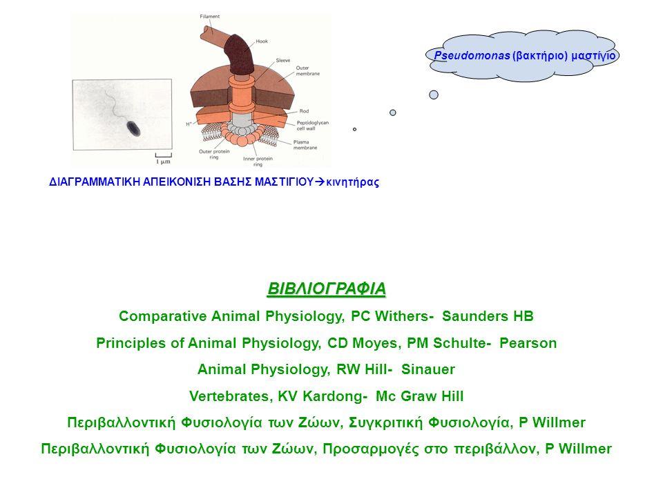 ΔΙΑΓΡΑΜΜΑΤΙΚΗ ΑΠΕΙΚΟΝΙΣΗ ΒΑΣΗΣ ΜΑΣΤΙΓΙΟΥ  κινητήρας Pseudomonas (βακτήριο) μαστίγιο ΒΙΒΛΙΟΓΡΑΦΙΑ Comparative Αnimal Physiology, PC Withers- Saunders