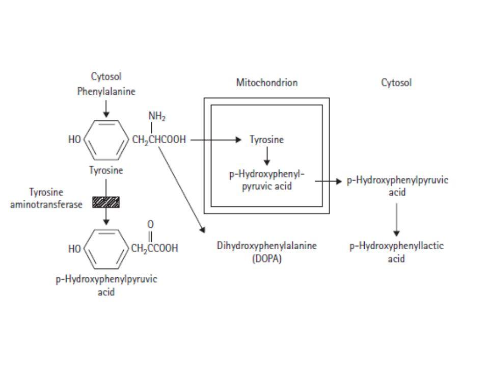 Ομοκυστινουρία Η μεγαλύτερη ποσότητα ομοκυστεϊνης στον οργανισμό μεθυλιώνεται συνήθως εκ νέου σε μεθειονίνη.