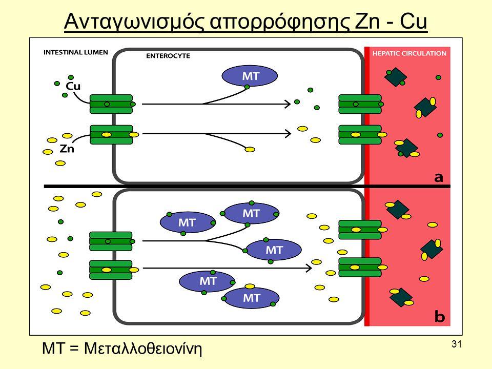 31 Ανταγωνισμός απορρόφησης Zn - Cu ΜΤ = Μεταλλοθειονίνη