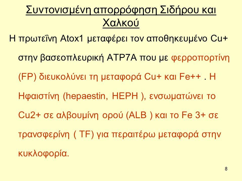 8 Συντονισμένη απορρόφηση Σιδήρου και Χαλκού Η πρωτεΐνη Atox1 μεταφέρει τον αποθηκευμένο Cu+ στην βασεοπλευρική ATP7A που με φερροπορτίνη (FP) διευκολ