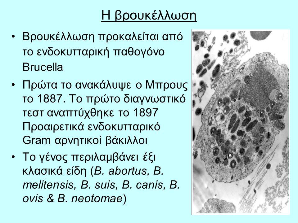 5 Η βρουκέλλωση Βρουκέλλωση προκαλείται από το ενδοκυτταρική παθογόνο Brucella Πρώτα το ανακάλυψε ο Μπρους το 1887.