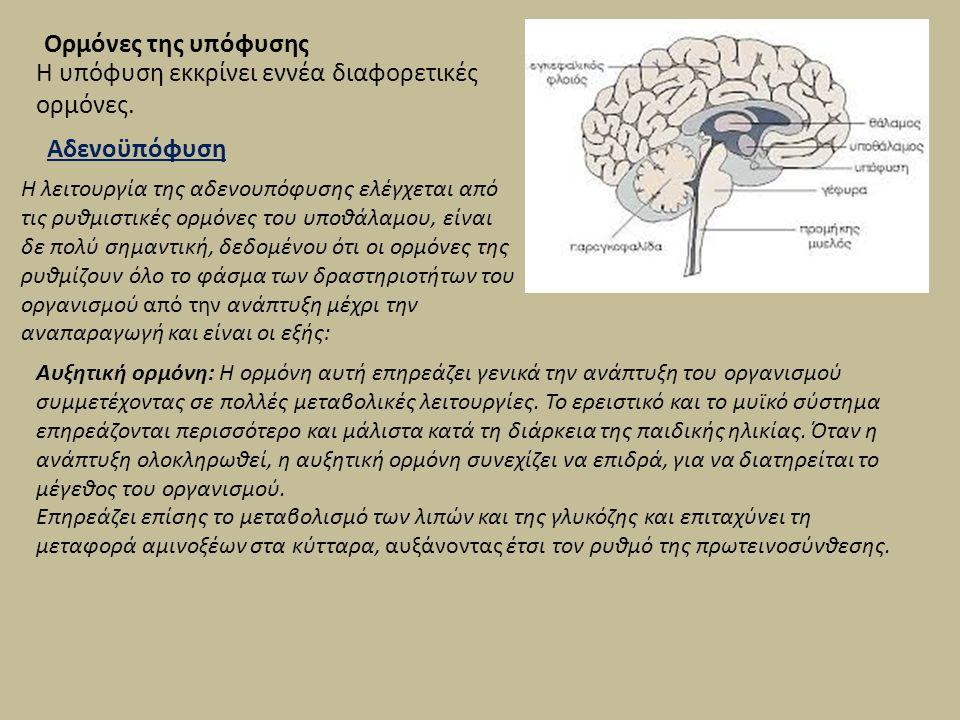 Ορμόνες της υπόφυσης Η υπόφυση εκκρίνει εννέα διαφορετικές ορμόνες. Αδενοϋπόφυση Η λειτουργία της αδενουπόφυσης ελέγχεται από τις ρυθμιστικές ορμόνες