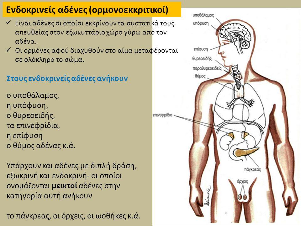 Πίνακας ενδοκρινών αδένων Περιλαμβάνει κατάλογο των αδένων, των ορμονών που παράγονται από αυτούς και των ασθενειών και καταστάσεων της υγείας που σχετίζεται με έλλειψη ισορροπίας στη ρύθμιση τους.
