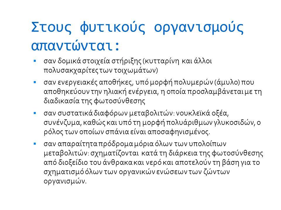Τίλιο (Φλαμουριά)  Tilia cordata Mill., T.platiphyllos Scop., T.