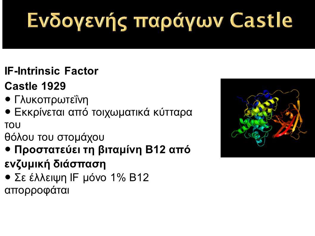 IF-Intrinsic Factor Castle 1929 ● Γλυκοπρωτεΐνη ● Εκκρίνεται από τοιχωματικά κύτταρα του θόλου του στομάχου ● Προστατεύει τη βιταμίνη Β12 από ενζυμική διάσπαση ● Σε έλλειψη IF μόνο 1% Β12 απορροφάται