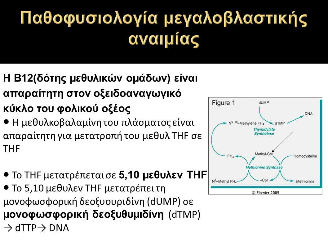 Η Β12(δότης μεθυλικών ομάδων) είναι απαραίτητη στον οξειδοαναγωγικό κύκλο του φολικού οξέος ● Η μεθυλκοβαλαμίνη του πλάσματος είναι απαραίτητη για μετατροπή του μεθυλ THF σε THF ● Το THF μετατρέπεται σε 5,10 μεθυλεν THF ● Το 5,10 μεθυλεν THF μετατρέπει τη μονοφωσφορική δεοξυουριδίνη (dUMP) σε μονοφωσφορική δεοξυθυμιδίνη (dTMP) → dTTP→ DNA