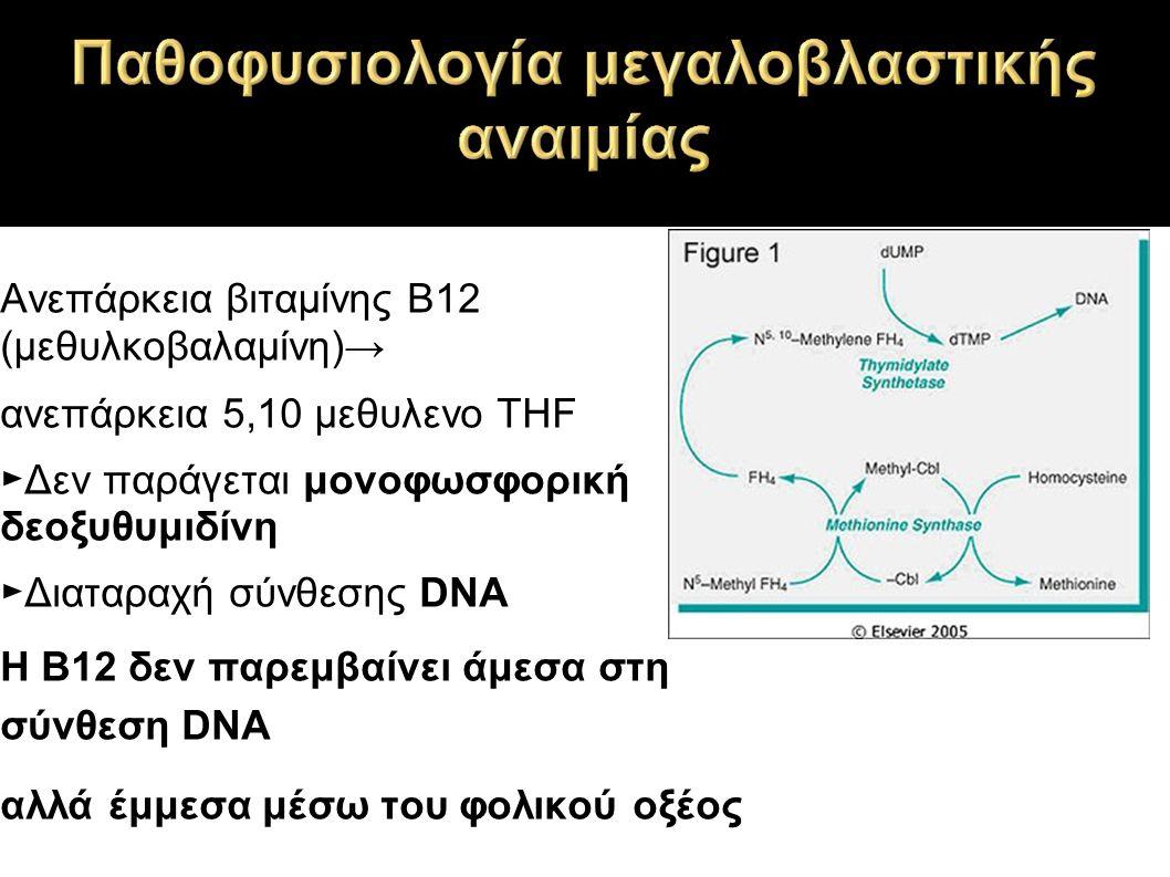 Ανεπάρκεια βιταμίνης Β12 (μεθυλκοβαλαμίνη)→ ανεπάρκεια 5,10 μεθυλενο THF ►Δεν παράγεται μονοφωσφορική δεοξυθυμιδίνη ►Διαταραχή σύνθεσης DNA Η Β12 δεν παρεμβαίνει άμεσα στη σύνθεση DNA αλλά έμμεσα μέσω του φολικού οξέος