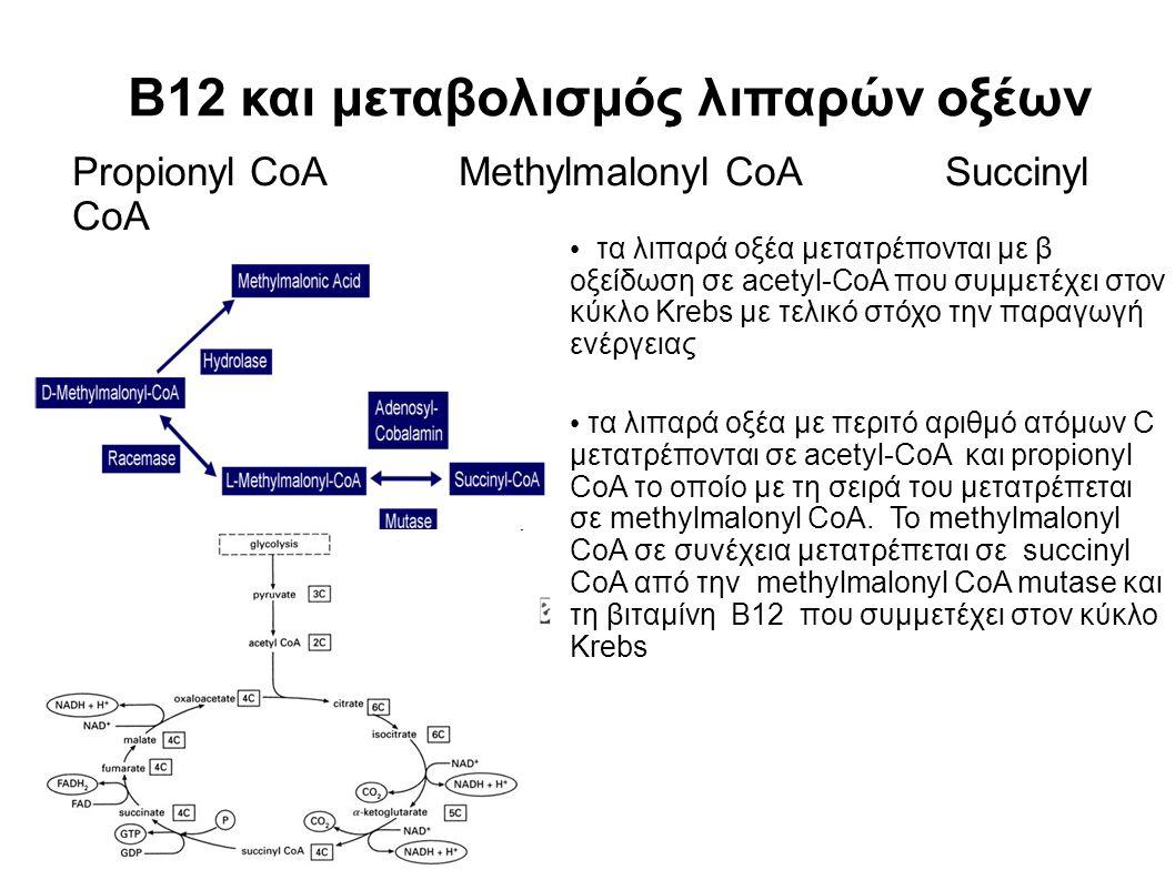 Β12 και μεταβολισμός λιπαρών οξέων τα λιπαρά οξέα μετατρέπονται με β οξείδωση σε acetyl-CoA που συμμετέχει στον κύκλο Krebs με τελικό στόχο την παραγωγή ενέργειας τα λιπαρά οξέα με περιτό αριθμό ατόμων C μετατρέπονται σε acetyl-CoA και propionyl CoA το οποίο με τη σειρά του μετατρέπεται σε methylmalonyl CoA.