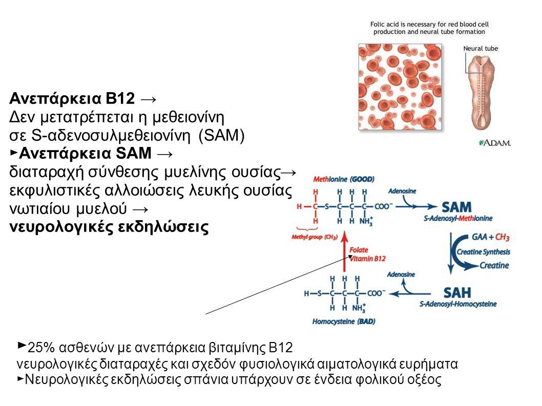 Ανεπάρκεια Β12 → Δεν μετατρέπεται η μεθειονίνη σε S-αδενοσυλμεθειονίνη (SAM) ►Ανεπάρκεια SAM → διαταραχή σύνθεσης μυελίνης ουσίας→ εκφυλιστικές αλλοιώσεις λευκής ουσίας νωτιαίου μυελού → νευρολογικές εκδηλώσεις ► 25% ασθενών με ανεπάρκεια βιταμίνης Β12 νευρολογικές διαταραχές και σχεδόν φυσιολογικά αιματολογικά ευρήματα ►Νευρολογικές εκδηλώσεις σπάνια υπάρχουν σε ένδεια φολικού οξέος