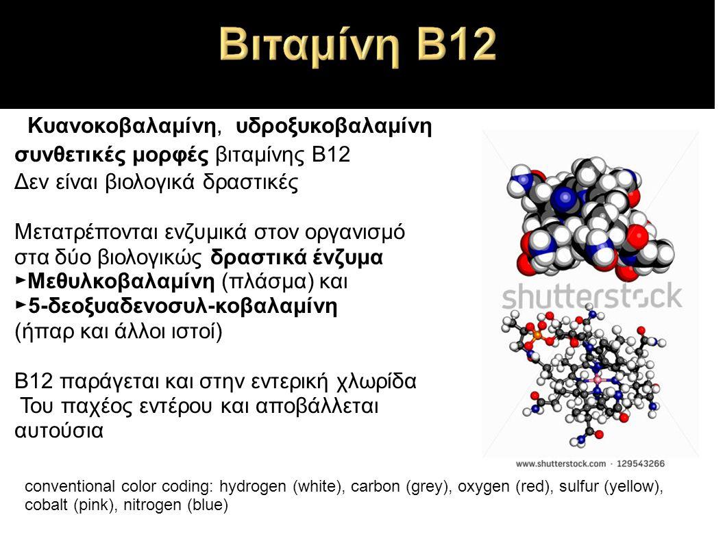 ►Κυανοκοβαλαμίνη, υδροξυκοβαλαμίνη συνθετικές μορφές βιταμίνης Β12 Δεν είναι βιολογικά δραστικές Μετατρέπονται ενζυμικά στον οργανισμό στα δύο βιολογικώς δραστικά ένζυμα ►Μεθυλκοβαλαμίνη (πλάσμα) και ►5-δεοξυαδενοσυλ-κοβαλαμίνη (ήπαρ και άλλοι ιστοί) Β12 παράγεται και στην εντερική χλωρίδα Του παχέος εντέρου και αποβάλλεται αυτούσια conventional color coding: hydrogen (white), carbon (grey), oxygen (red), sulfur (yellow), cobalt (pink), nitrogen (blue)