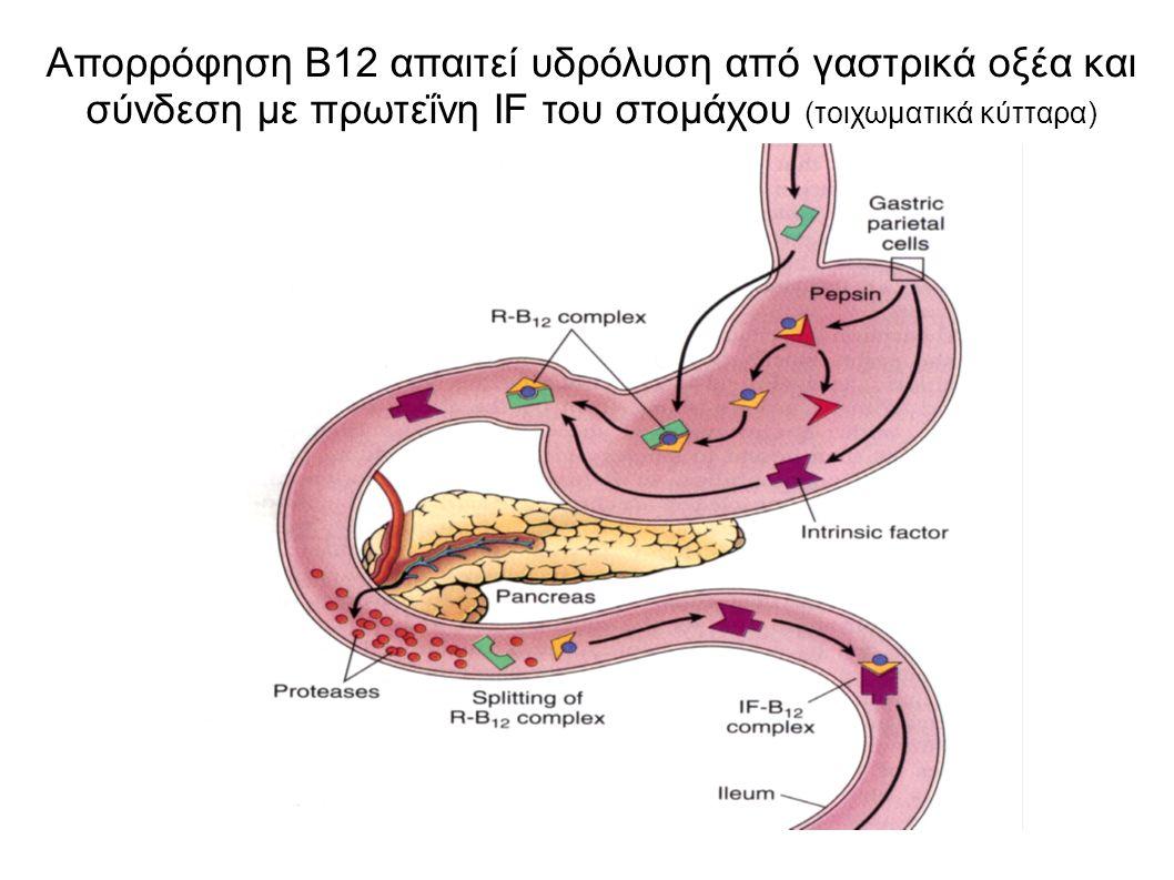 Απορρόφηση B12 απαιτεί υδρόλυση από γαστρικά οξέα και σύνδεση με πρωτεΐνη IF του στομάχου (τοιχωματικά κύτταρα)