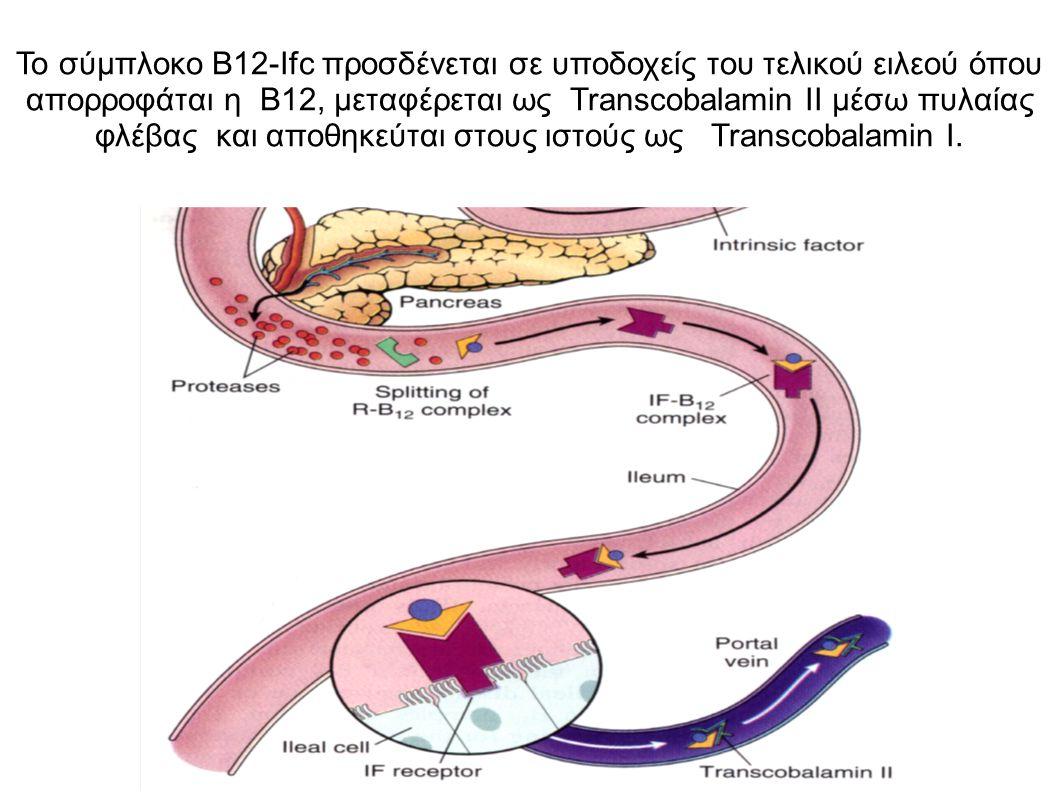 Το σύμπλοκο B12-Ifc προσδένεται σε υποδοχείς του τελικού ειλεού όπου απορροφάται η B12, μεταφέρεται ως Transcobalamin ΙI μέσω πυλαίας φλέβας και αποθηκεύται στους ιστούς ως Transcobalamin I.