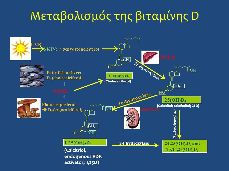 Μεταβολισμός της βιταμίνης D 24-hydroxylase 24,25(OH) 2 D 3 and 1α,24,25(OH) 2 D 3 Plants: ergosterol  D 2 (ergocalciferol) 7-dehydrocholesterol SKIN