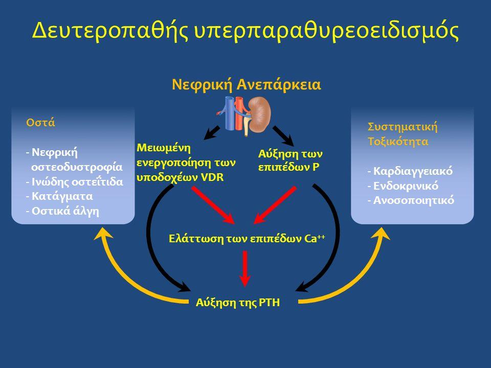 Νεφρική Ανεπάρκεια Μειωμένη ενεργοποίηση των υποδοχέων VDR Αύξηση των επιπέδων P Ελάττωση των επιπέδων Ca ++ Αύξηση της PTH Οστά - Νεφρική οστεοδυστρο