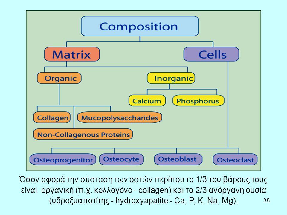 35 Όσον αφορά την σύσταση των οστών περίπου το 1/3 του βάρους τους είναι οργανική (π.χ.