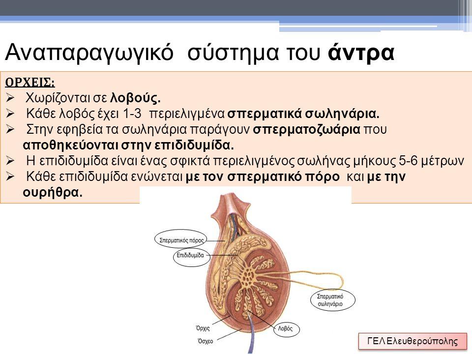 Θυλακιοτρόπος ορμόνη, FSH Εκκρίνεται από την υπόφυση προκαλεί την ωρίμανση ενός νέου ωοθυλακίου Κύριες ορμόνες έμμηνης ρύσης Οιστρογόνα Εκκρίνεται από ωοθυλάκιο με σκοπό να προκαλέσει την προετοιμασία της μήτρας Ωχρινοτρόπος ορμόνη, LH Εκκρίνεται από την υπόφυση αφού αυξηθούν τα οιστρογόνα και προκαλεί ωοθυλακιορρηξία Προγεστερόνη Εκκρίνεται από τα ωοθυλάκια με σκοπό την προετοιμασία της μήτρας
