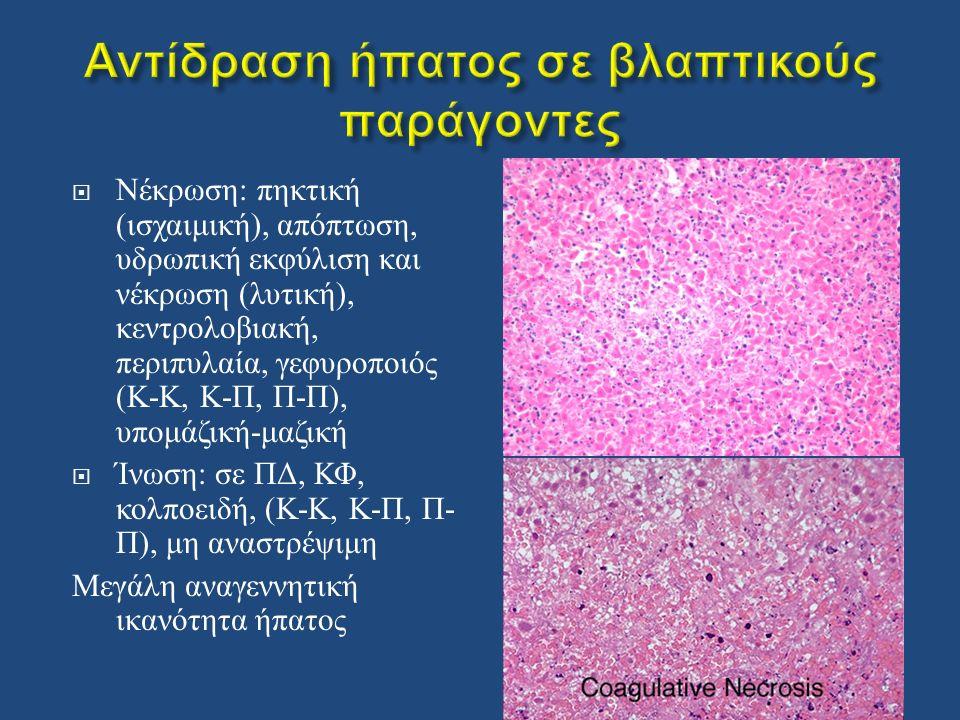  Νέκρωση : πηκτική ( ισχαιμική ), απόπτωση, υδρωπική εκφύλιση και νέκρωση ( λυτική ), κεντρολοβιακή, περιπυλαία, γεφυροποιός ( Κ - Κ, Κ - Π, Π - Π ), υπομάζική - μαζική  Ίνωση : σε ΠΔ, ΚΦ, κολποειδή, ( Κ - Κ, Κ - Π, Π - Π ), μη αναστρέψιμη Μεγάλη αναγεννητική ικανότητα ήπατος