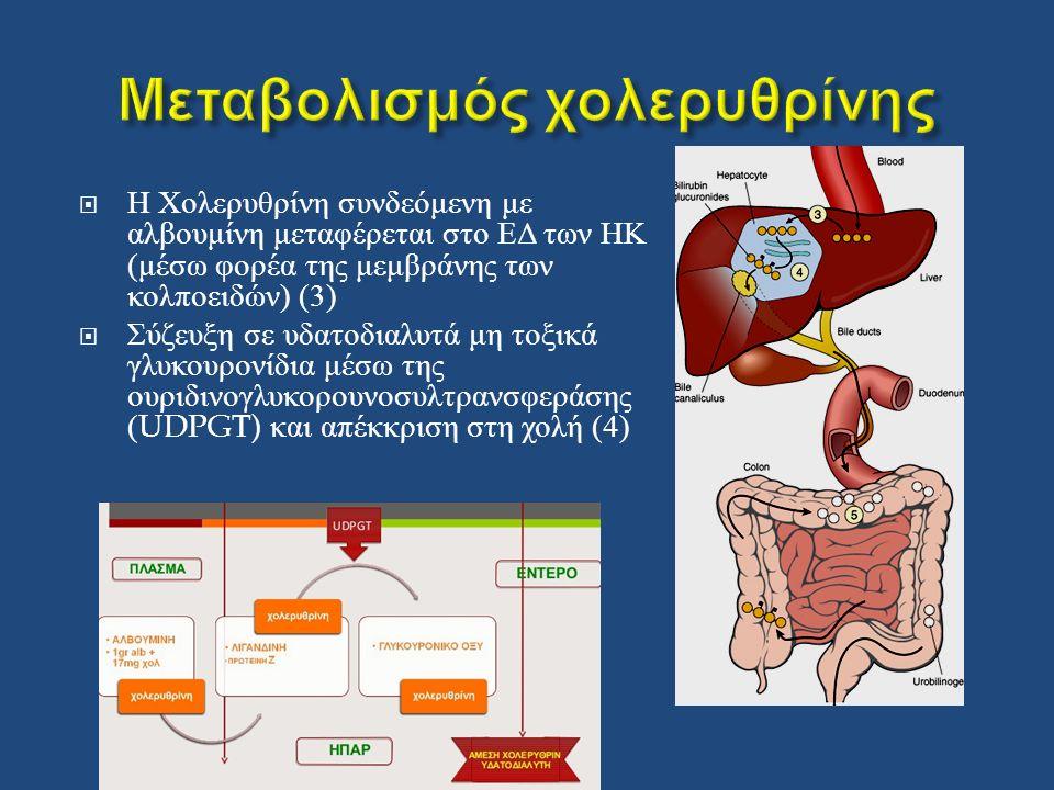  Η Χολερυθρίνη συνδεόμενη με αλβουμίνη μεταφέρεται στο ΕΔ των ΗΚ ( μέσω φορέα της μεμβράνης των κολποειδών ) (3)  Σύζευξη σε υδατοδιαλυτά μη τοξικά γλυκουρονίδια μέσω της ουριδινογλυκορουνοσυλτρανσφεράσης (UDPGT) και απέκκριση στη χολή (4)