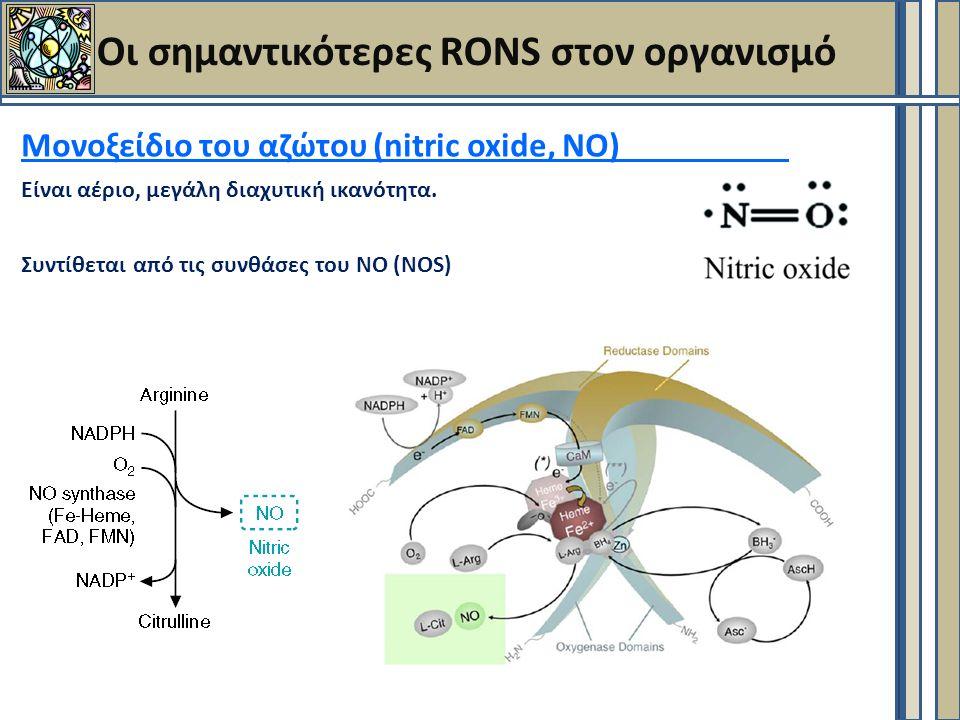 Οι σημαντικότερες RONS στον οργανισμό Μονοξείδιο του αζώτου (nitric oxide, NO) Είναι αέριο, μεγάλη διαχυτική ικανότητα.