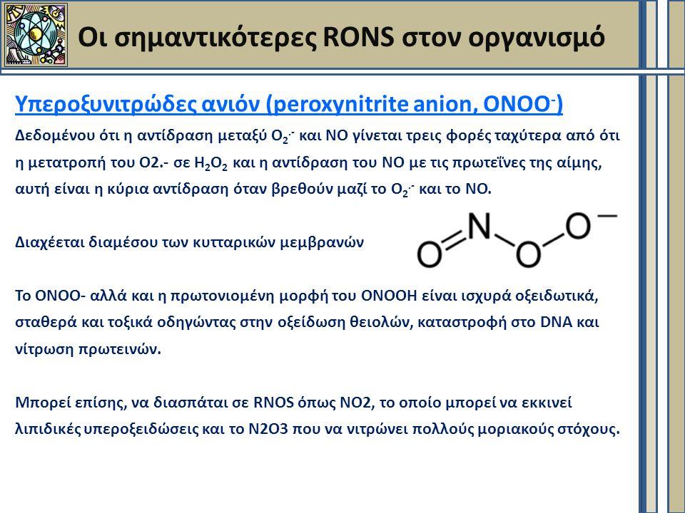 Οι σημαντικότερες RONS στον οργανισμό Υπεροξυνιτρώδες ανιόν (peroxynitrite anion, ΟΝΟΟ - ) Δεδομένου ότι η αντίδραση μεταξύ Ο 2.- και ΝΟ γίνεται τρεις φορές ταχύτερα από ότι η μετατροπή του Ο2.- σε Η 2 Ο 2 και η αντίδραση του ΝΟ με τις πρωτεΐνες της αίμης, αυτή είναι η κύρια αντίδραση όταν βρεθούν μαζί το Ο 2.- και το ΝΟ.