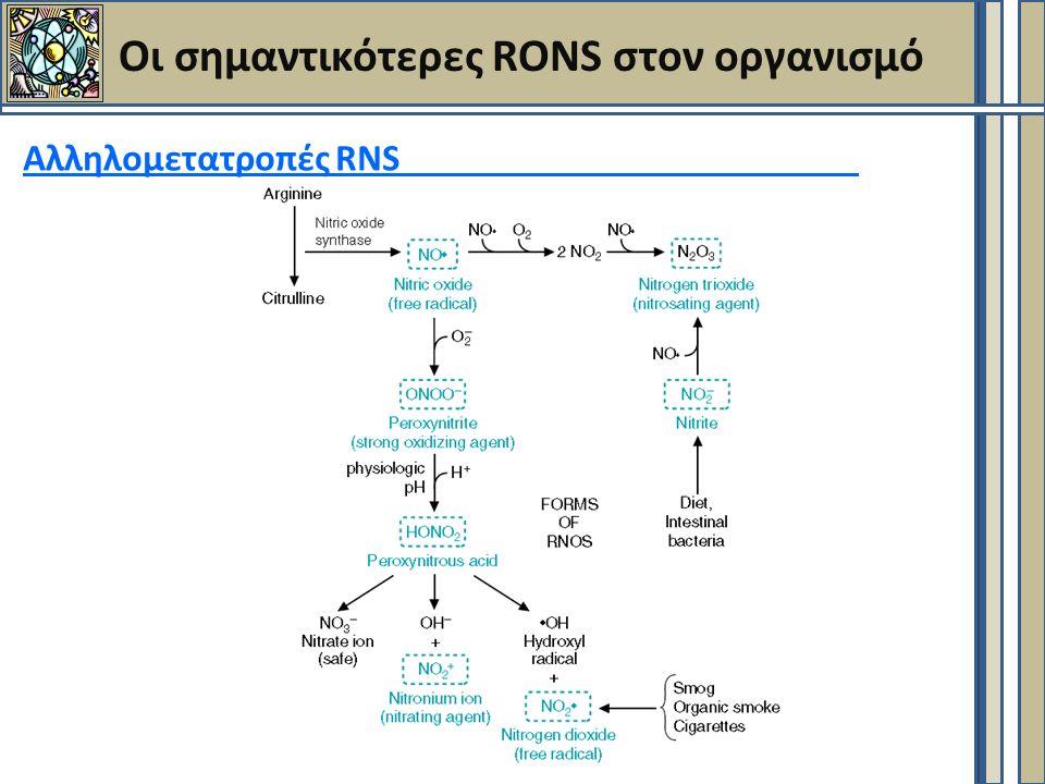 Οι σημαντικότερες RONS στον οργανισμό Αλληλομετατροπές RNS