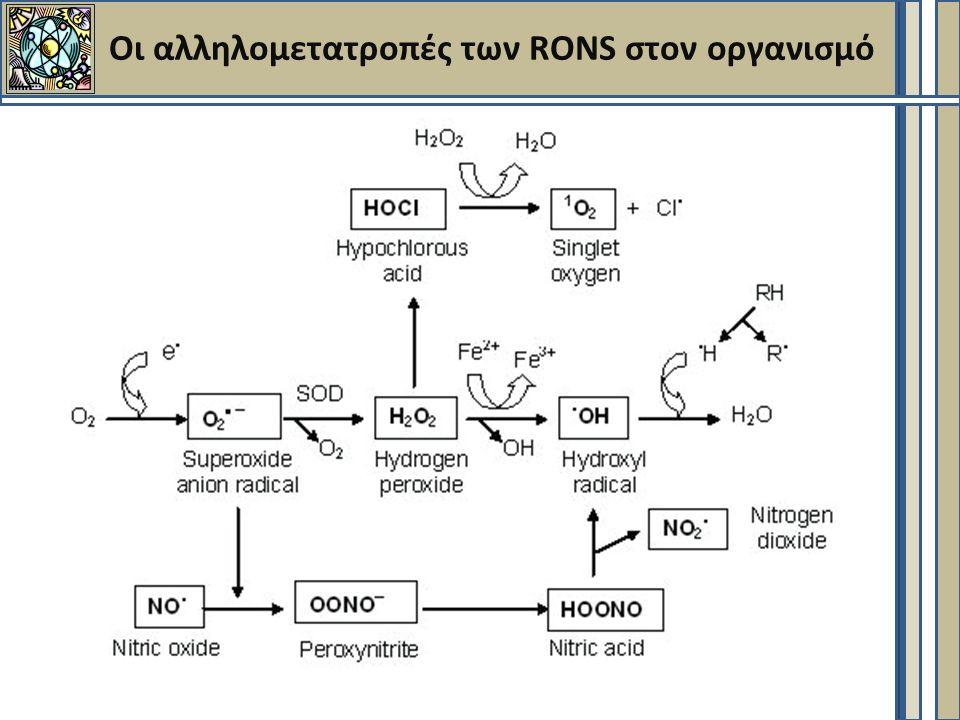 Οι αλληλομετατροπές των RONS στον οργανισμό