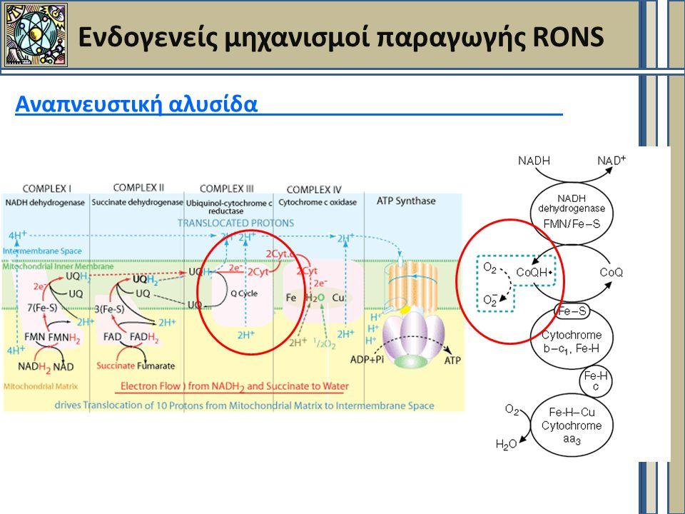 Ενδογενείς μηχανισμοί παραγωγής RONS Αναπνευστική αλυσίδα